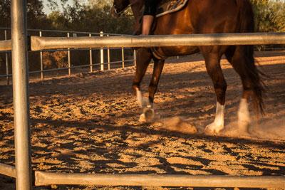 Mescal Park Equestrian Arena