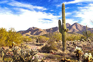 Picture of the Sonoran Desert