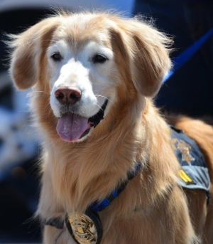 police-crisis-response-canine-fozzie-3