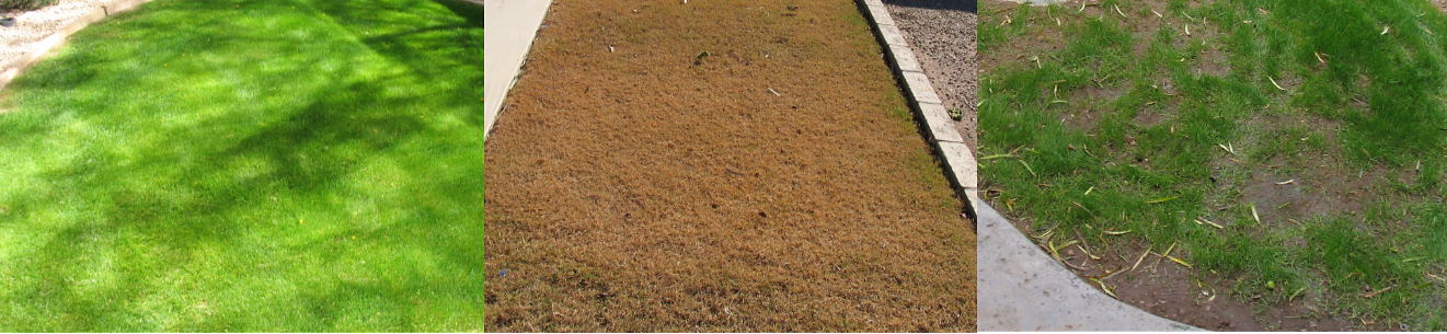 EligibleGrassRebate