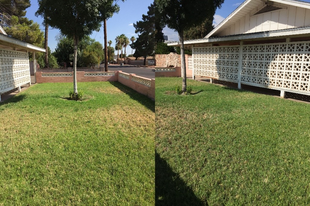 Ineligible lawn images